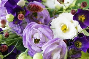 今月のお花 誕生花を贈ろう 送料無料 ネット通販花屋花樹有(かじゅある )