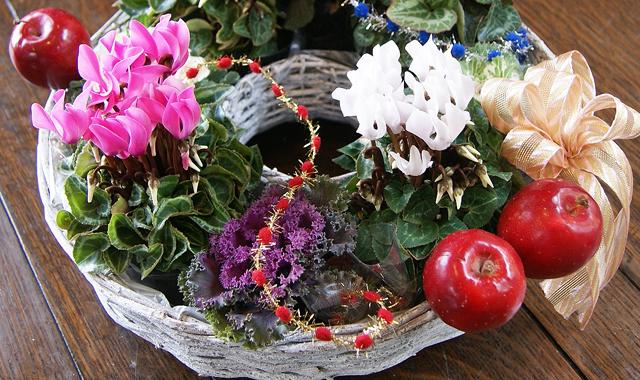 シクラメン バームクーヘン 寄せカゴ 観葉植物 インテリアグリーン 送料無料 ネット通販花屋花樹有(かじゅある )