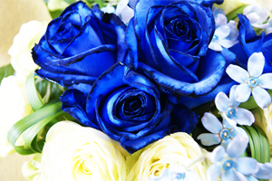 ブルーローズ 花瓶のいらない花束 フラワーギフト 送料無料 ネット通販花屋花樹有(かじゅある )