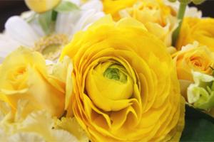 今月の花 誕生花 3月 送料無料 ネット通販花屋花樹有(かじゅある )