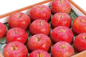 山形のうまいもの  山形産 リンゴ  工藤農園