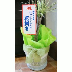 プレゼントギフト用ラッピング 送料無料 ネット通販花屋花樹有(かじゅある)