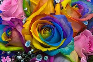 レインボーローズ 虹色のばらフラワーギフト 送料無料 ネット通販花屋花樹有(かじゅある )
