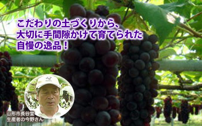 葡萄(ぶどう)畑