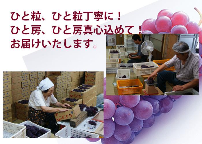 葡萄詰 作業