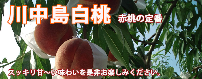 桃 川中島白桃 山形産