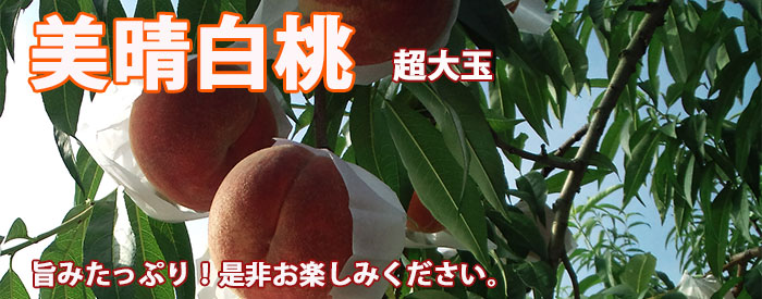 山形桃 美晴白桃