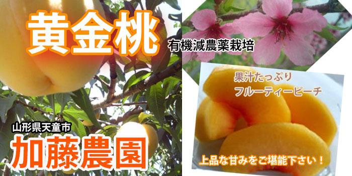 黄金桃 加藤農園 山形県天童市 有機減農薬栽培