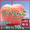 山形県村山市 工藤農園の訳あり   りんご サンふじ 完熟蜜入り 10kg L~Mサイズ
