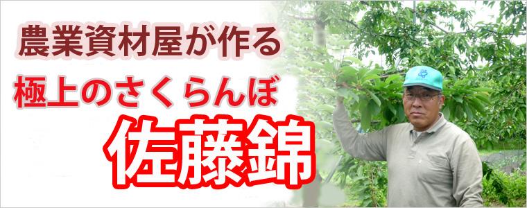 山形産 さくらんぼ 佐藤錦 佐藤農産 ネット通販花屋 花樹有(かじゅある)
