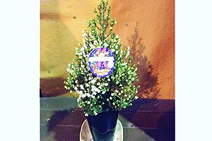 クリスマスエリカ スズランエリカ クリスマスツリー